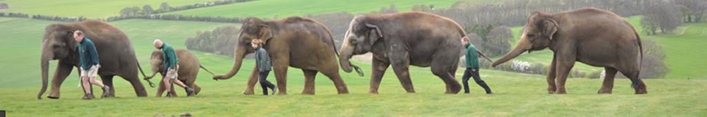 Elephant train image_edited-1